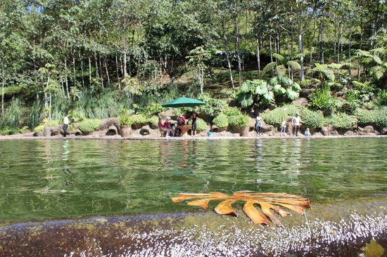 Peace Lodge: The trout pool..catch your own and they'll cook it up!