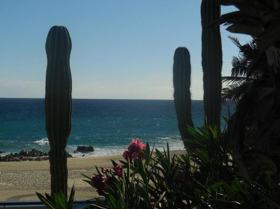 The Westin Los Cabos Resort Villas & Spa: Cactus everywhere