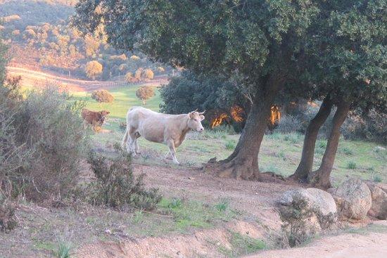 Domaine de Murtoli : Le domaine