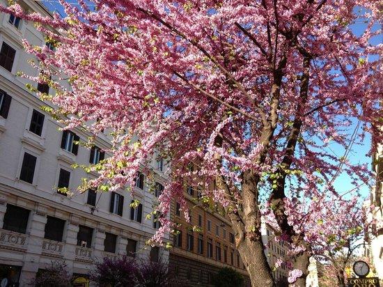 Vatican Vista : Spring in Piazza Risorgimento