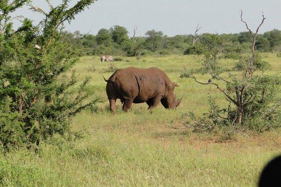 Tamboti Satellite Camp: Rinoceronte