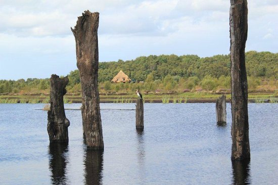 Lullymore Heritage and Discovery Park : Peatland Biodiversity Walk in Lullymore Heritage Park