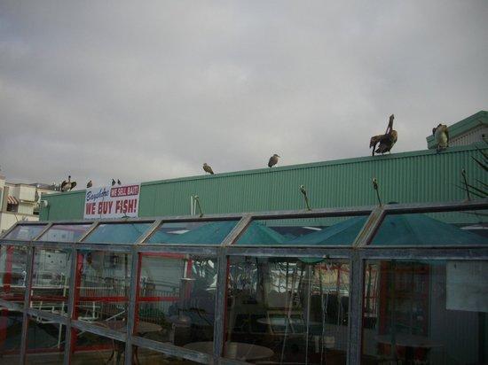 Morro Rock: Пеликаны на крыше