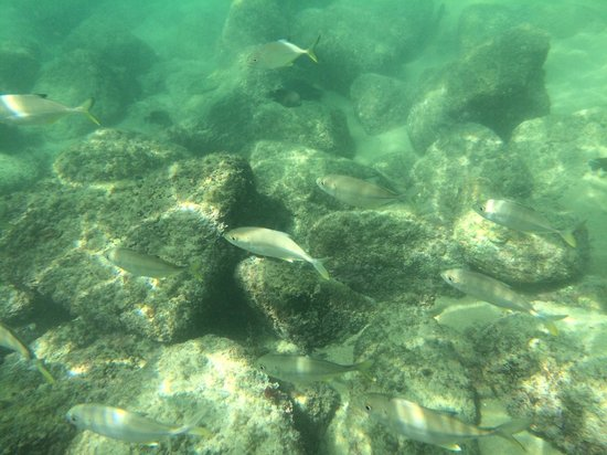 Maguey Bay: Different fish