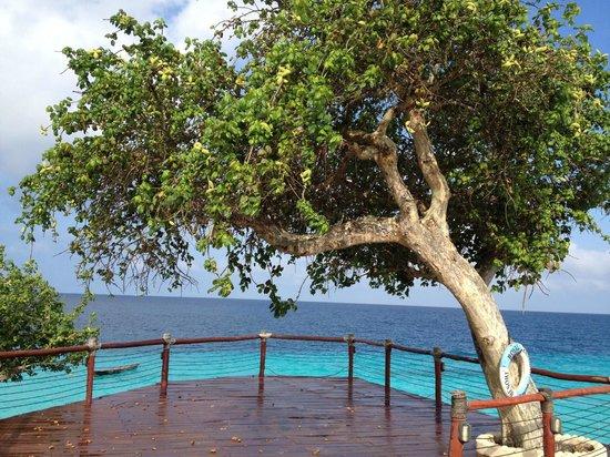 Royal Zanzibar Beach Resort: Ocean side look out