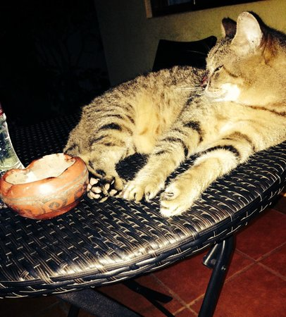 Villas Macondo: Schroedi the VERY friendly cat! Give him a cuddle from us!