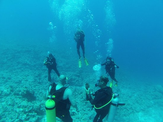 Eleuthera Bora Diving Center: Reef dive