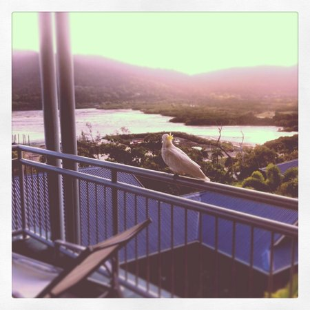 Peppers Airlie Beach : one of the many visitors we had
