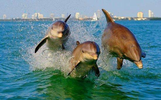 Florida Aqua Adventures: Dolphins ride