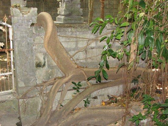Uma Sapna : Root problem? What root problem?