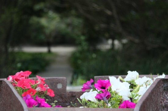 Sandpiper Ocean Cottages: Nice garden right outside the cottage