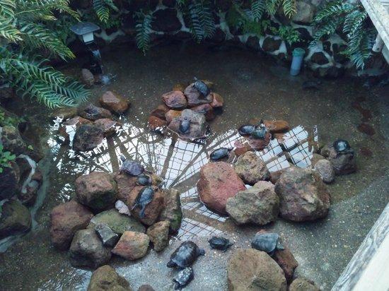 Hakodate Tropical Botanical Garden: 函館市熱帯植物園の亀