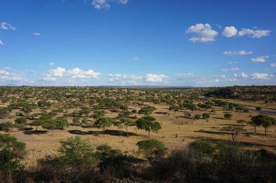 Tarangire Safari Lodge: View from lodge's scenic overlook.