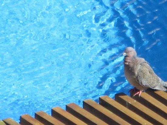 Conrad Punta del Este Resort & Casino : piscina