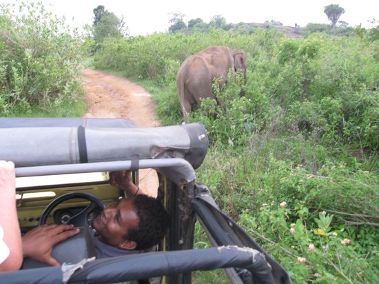 Lanka Tracker - Day Tours : Elephant spotting