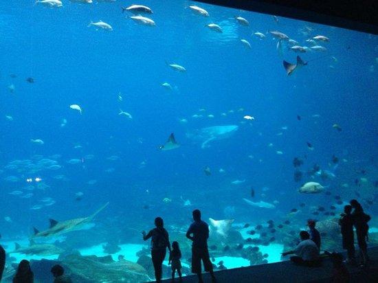 Whale Shark Picture Of Georgia Aquarium Atlanta