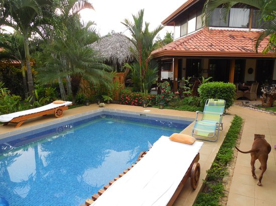 Vista Hermosa Boutique Bed & Breakfast : The house, pool and friendly dog!