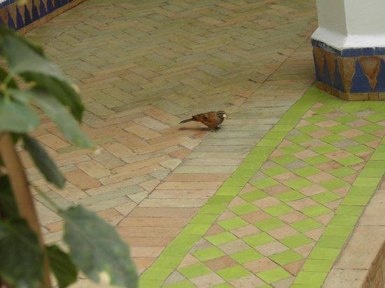 Riad Les Bougainvilliers : nous ne sommes pas les seuls a aprécier le petit dèj