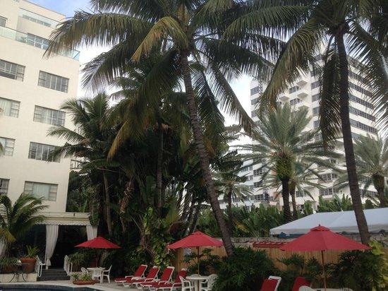 Richmond Hotel : Les palmiers