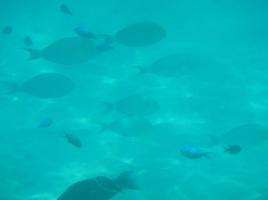 Blue Lagoon Beach Resort : Snorkelling