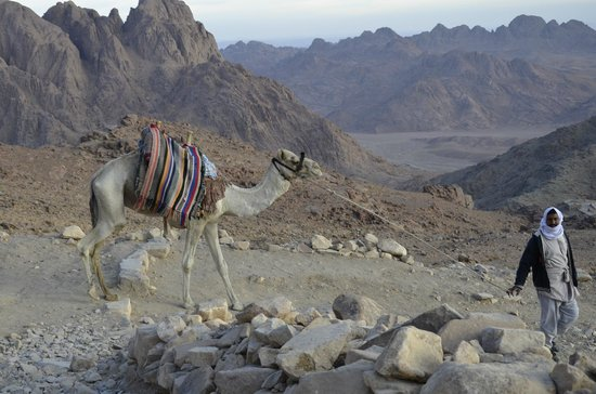 Mount Sinai: Mr Fathey and Taxi