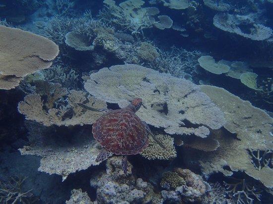 Hadahaa Island: coral