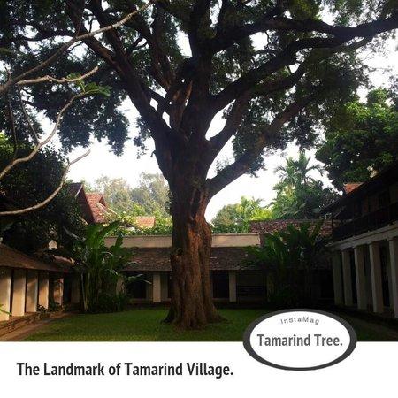 Tamarind Village: Tamarind tree