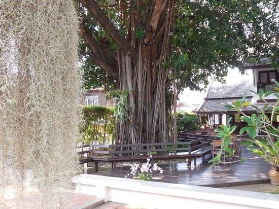 Rimping Village: le petit dejeuner sous le bel arbre