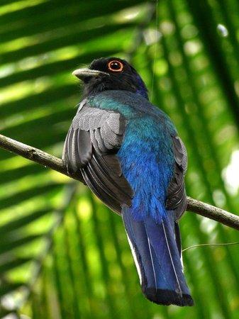 Yacutinga Lodge : Avistaje de aves