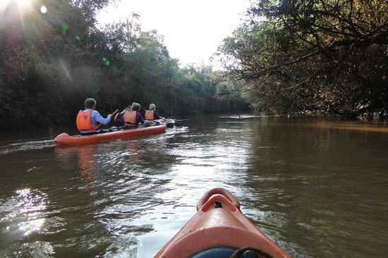 Yacutinga Lodge : Recorrido por el arroyo en canoa