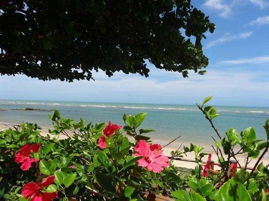 Privillage Praia: vista do deck do local....Flores de hibiscus na praia? Luxo!!!