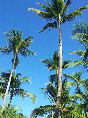 Paradisus Punta Cana: S