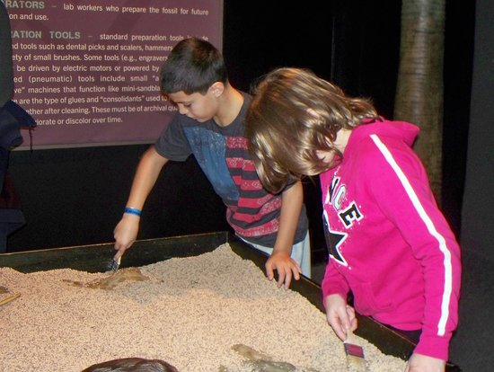 Academy of Natural Sciences of Drexel University: Grandson Nathan digging for fossils