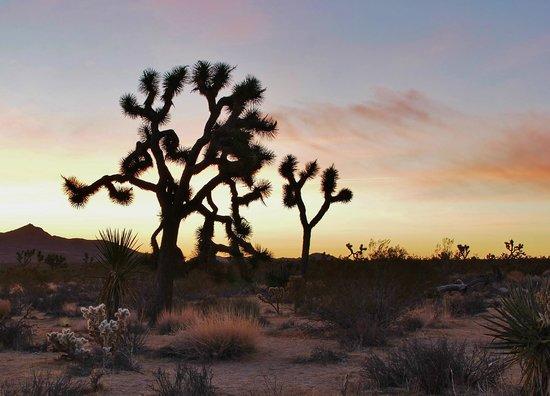 Joshua Tree National Park: Sunrise