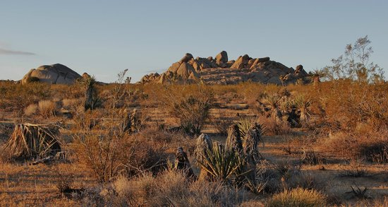 Joshua Tree National Park: Early morning sun