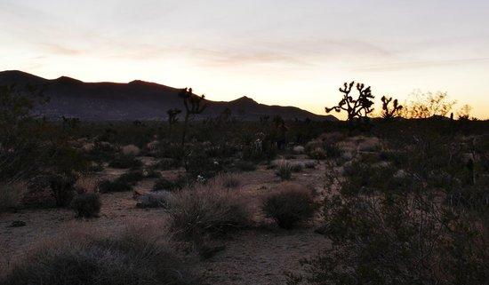 Joshua Tree National Park: After sunrise