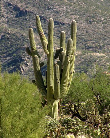 The Jeremiah Inn Bed and Breakfast: The Amazing Saguaro Cactus