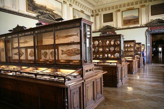Muséum d'histoire naturelle de Vienne : Evolutie en fossielen
