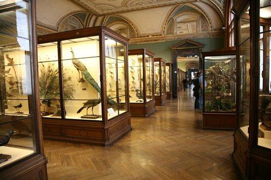 Muséum d'histoire naturelle de Vienne : Vogels in de afdeling gewervelde dieren