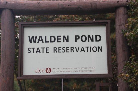 Walden Pond State Reservation: Walden Pond