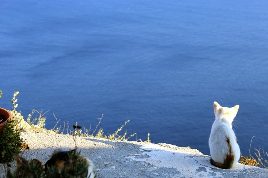 Golden Sunset Villas : Kitty enjoying the view in Oia.