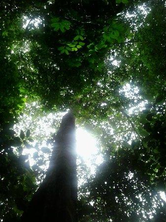 Pacaya Samiria: Explendor de la selva amazónica