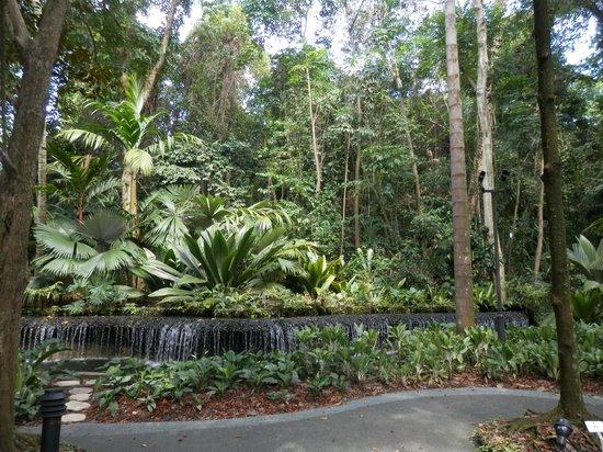 Bromelia house for Jardin botanique singapour