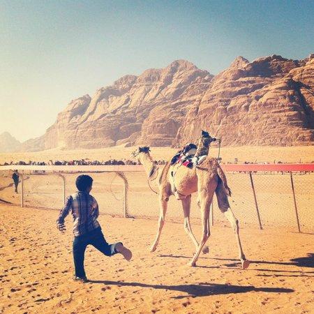 Wild Wadi Rum Camp: Camel race
