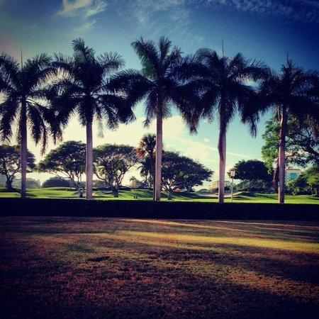 Boca Raton Resort, A Waldorf Astoria Resort: Palm trees @ the hotel