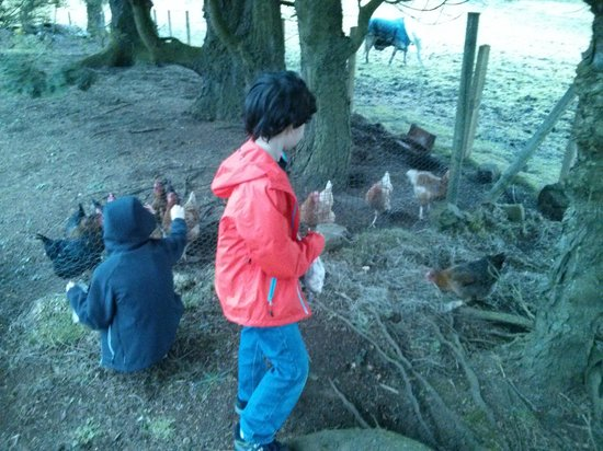 Garalapin House Bed & Breakfast: Chicken Feeding Time