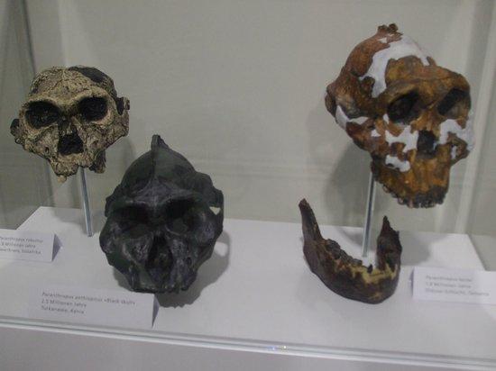 Anthropological Institute & Museum