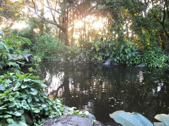 Monteverde Lodge & Gardens: Pond in the garden