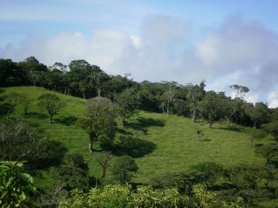 Coffee Tour El Cafetal : A clear and sunny moment in the cloud forest