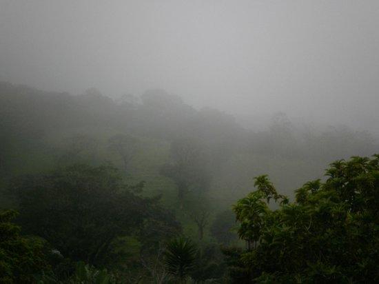 Coffee Tour El Cafetal : Monte Verde is a cloud forest